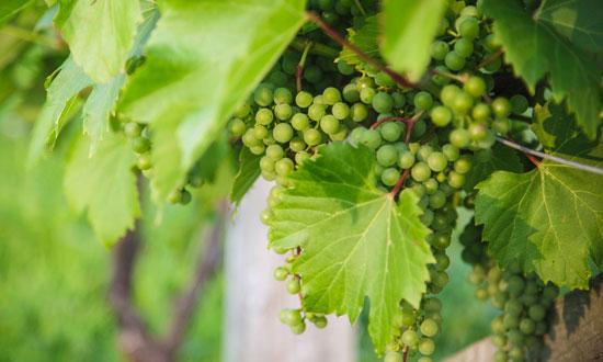 Soirée 5 à 9 au Domaine & Vins Gélinas